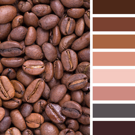 complimentary: A background of City roast coffee beans. In a colour palette with complimentary colour swatches. Stock Photo