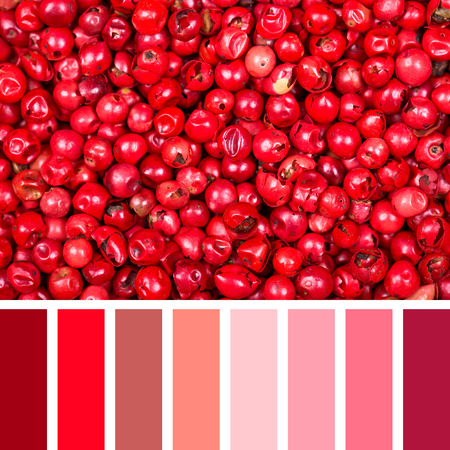complimentary: A background of dried pink peppercorns. In a colour palette with complimentary colour swatches. Stock Photo