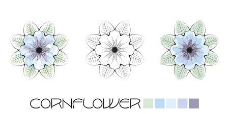 fiori di campo: Stilizzato colorazione Fiordaliso, pagina con l'acquerello ed esempi di colori piatti e una opzione in bianco e nero per completare da soli. EPS10 formato vettoriale