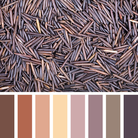 swatches: A background of wild rice In a colour palette with complimentary colour swatches.