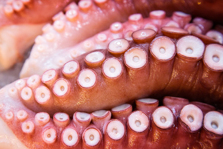 Octopus closeup at a Japanese fish market Фото со стока