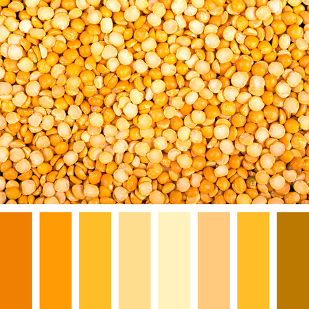 complimentary: A background of dried yellow lentils, in a colour palette with complimentary swatches. Stock Photo