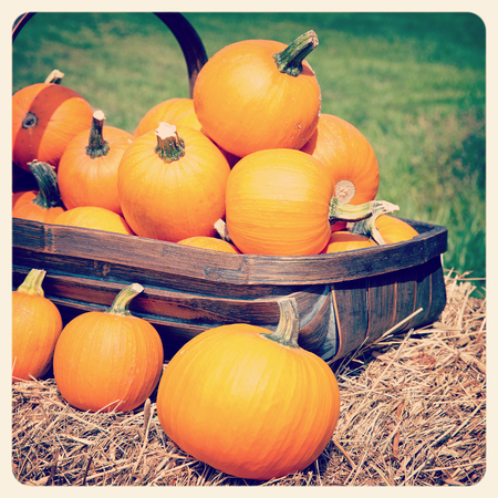 Pumpkins displayed in a trug. Filtered to look like an aged instant photo.