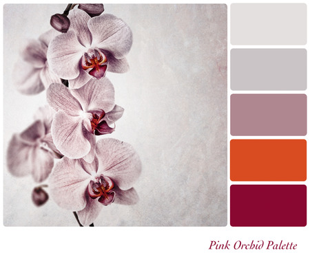 A vintage effect, delicate pink orchid with complimentary colour palette Stock Photo