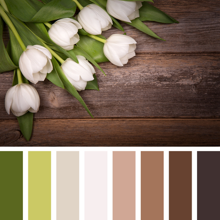 white colour: White tulips over old wood background. In a colour palette with complimentary colour swatches. Stock Photo