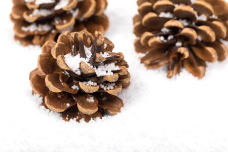 seasonal symbol: Group of fir cones in the snow with space for text. Seasonal symbol of winter and Christmas.