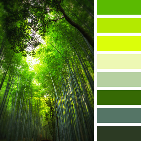 complimentary: Grove of giant bamboo in Kyoto, Japan. Set In a colour palette with complimentary colour swatches.