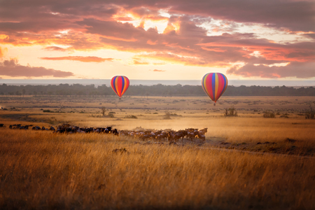 Sunrise over the Masai Mara, with a pair of low-flying hot air balloons and a herd of wildebeest below in the typical red oat grass of the region. In Kenya during the annual Great Migration. Фото со стока
