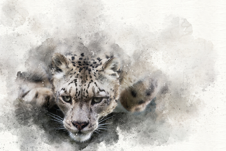 Mixed media digital painting of a snow leopard in motion Stock fotó - 101262276