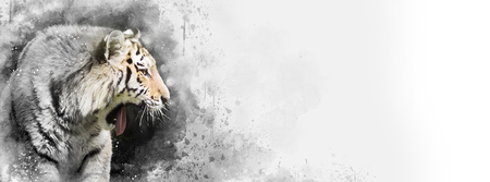 Siberian tiger mixed media digital painting in black and white with a touch of subtle colour. Horizontal banner in popular social media proportions. Space for your text. Stock fotó - 101533742