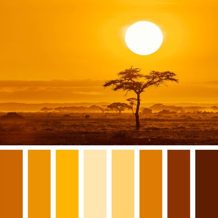 Sunrise over an acacia tre in Amboseli National Park, Kenya, in a colour palette with complimentary colour swatches.