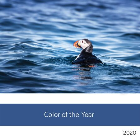 Color of the year 2020. View of a lone Atlantic Puffin in the cold waters of the Arctic ocean off the coast of Svalbard,in classic, rich blue tones.