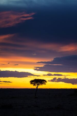 Sunset in the Masai Mara with acacia tree silhouette. Vertical composition with space for text.