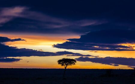Sunset in the Masai Mara with acacia tree silhouette. Horizontal composition with space for text.