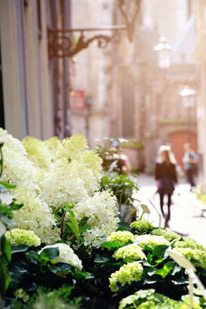 Flowers for sale on a street stall in Amsterdam with blurred unidentifiable people in the sunlit background.