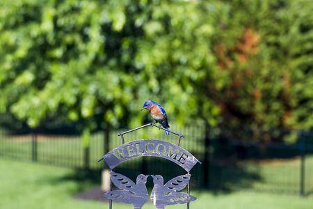 Bluebird Reading Sign