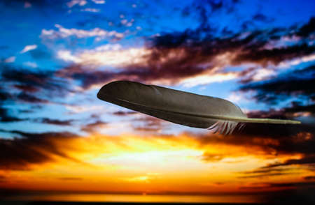a grey feather in golden hour sunset background