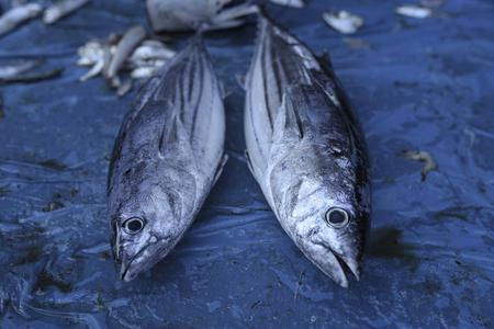 Tuna Fish Stok Fotoğraf - 101545643