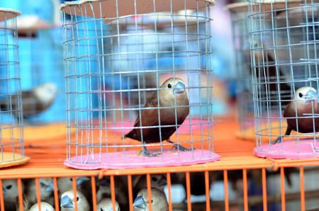 sparrows in a cage on the market