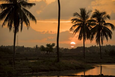 The beauty of the Sunset from the gap of the coconut tree