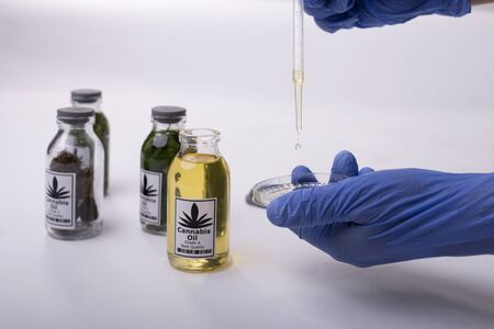 Cannabis Oil Production to medicine research Imagens