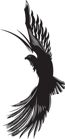 Vector abstract drawing of soaring eagle  Illustration