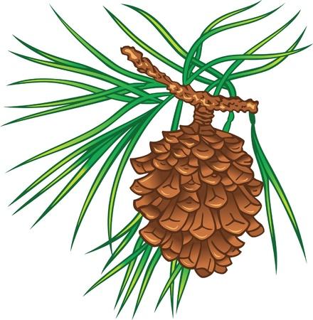 fir cone: Rama verde de �rbol de pino con el cono Vectores