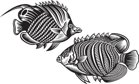 carp fishing: pesce nero Vettoriali