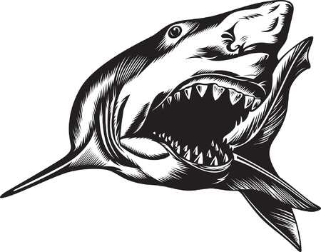 fish silhouette: Big aggressive shark with open mouth Illustration