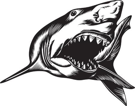 shark teeth: Gran tibur�n agresivo con la boca abierta