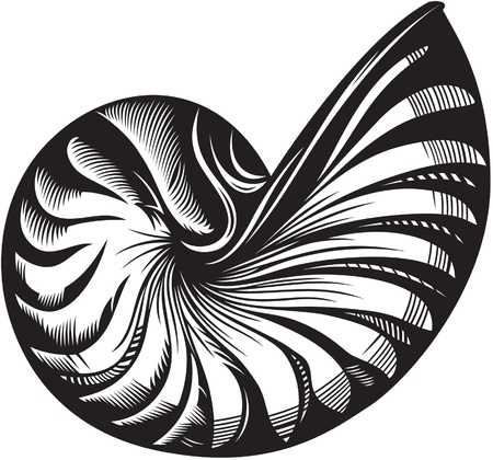 snails: illustration on sea shell  Black and white style Illustration