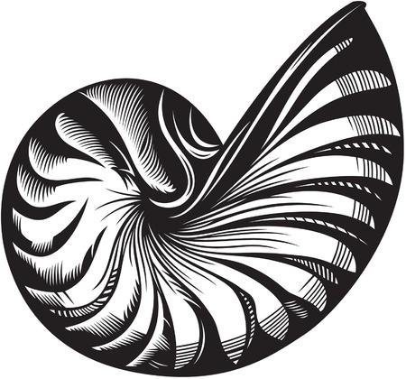 caracol: ilustración de la cáscara del mar Negro y blanco de estilo