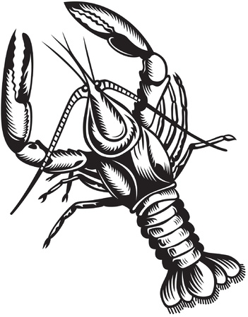 crawfish: Stylized illustration of crayfish. Black and white style