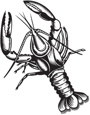Stylized illustration of crayfish. Black and white style