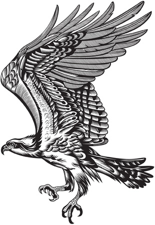 eagle: wild predatory bird