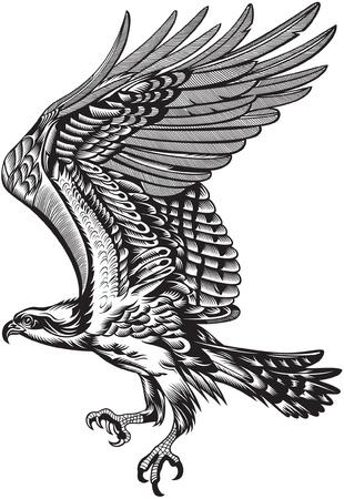 adler silhouette: wilden Raubvogel Illustration