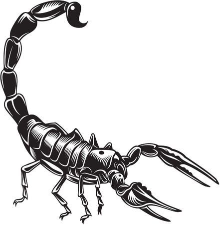 poisonous organism: Scorpion, black and white style Illustration