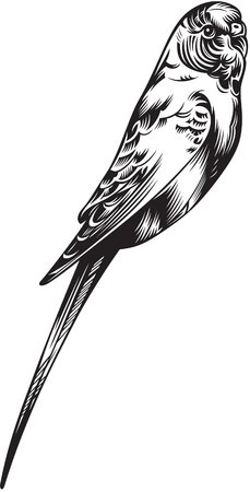 warble: illustration of Canary Bird, black and white style Illustration