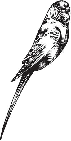 ruiseñor: ilustración del pájaro canario, negro y blanco de estilo Vectores