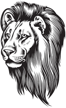 head of lion: Lion head with mane Illustration