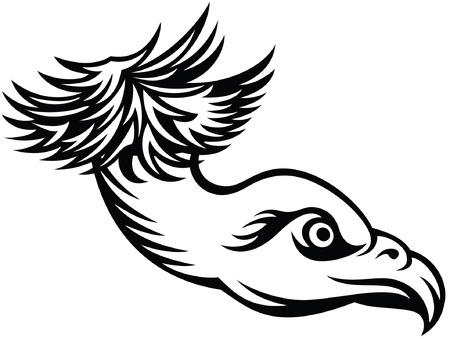 predatory: head of predatory bird