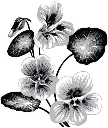bloem van de Oost-Indische kers, zwart-wit stijl