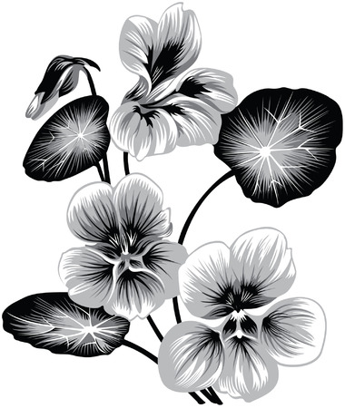 nasturtium: flower of nasturtium, black and white style