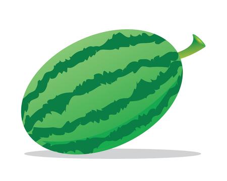 Watermelon (Citrullus lanatus var. lanatus, family Cucurbitaceae) is a vine-like (scrambler and trailer) flowering plant originally from southern Africa