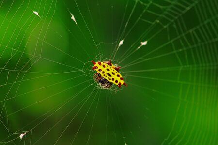 web: Spider Web Stock Photo