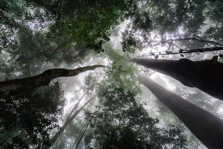 Rain forest of Ceruk Tokkun, Penang