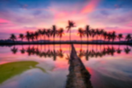 effect sunset: Silhouette of tropical palm trees at paddy field during sunset or sunrise, with reflection in water in blurry effect Stock Photo