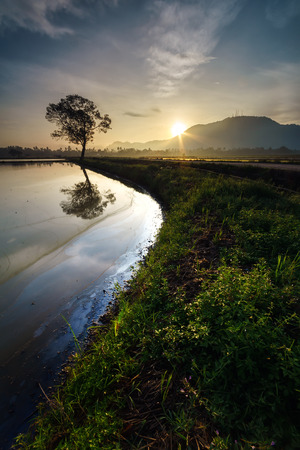 The reflection of the sunlight in between tree and hills during  sunrise with the curve shape lead line of the grass in Kubang Semang, Pulau Pinang Stock Photo