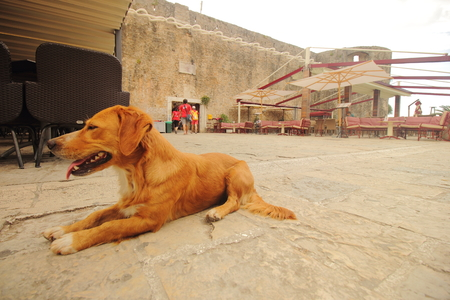 A dog waiting for its owner in Old Town Stock Photo