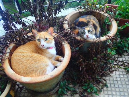 Cats in the flower pots